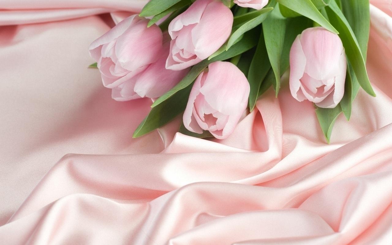 41141 скачать обои Растения, Цветы, Тюльпаны - заставки и картинки бесплатно