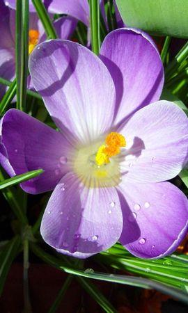 2844 скачать обои Растения, Цветы - заставки и картинки бесплатно