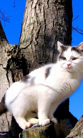 8176 download wallpaper Animals, Cats screensavers and pictures for free