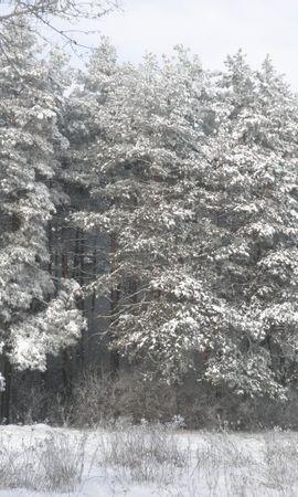 25430 скачать обои Пейзаж, Зима, Деревья, Снег - заставки и картинки бесплатно