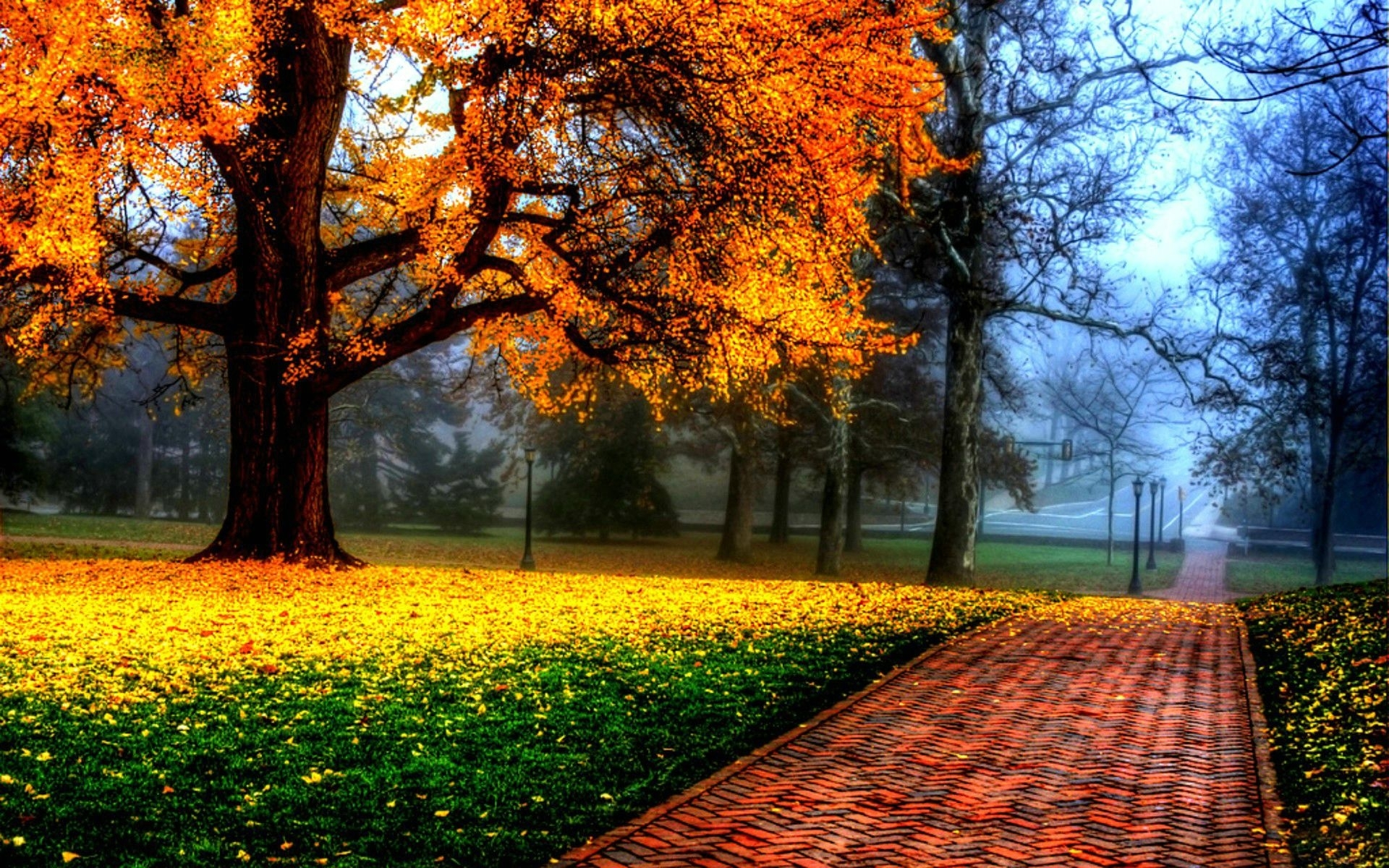 27963 download wallpaper Landscape, Trees, Autumn screensavers and pictures for free