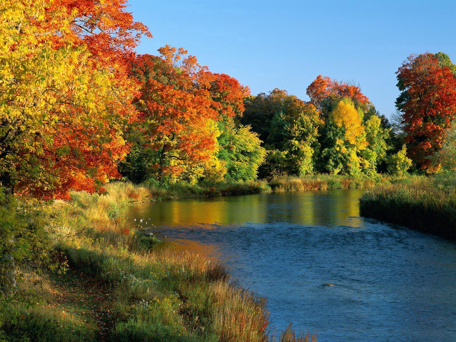86502 скачать обои Природа, Онтарио, Канада, Деревья, Река, Берега, Осень, Течение - заставки и картинки бесплатно
