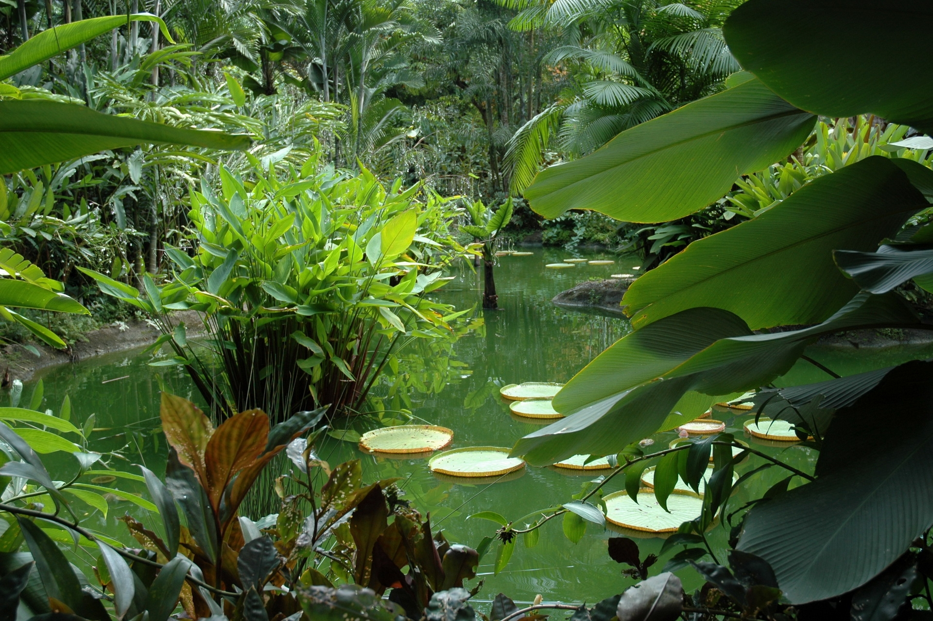69571 download wallpaper Nature, Pond, Vegetation, Leaves, Juicy, Greens, Flora screensavers and pictures for free
