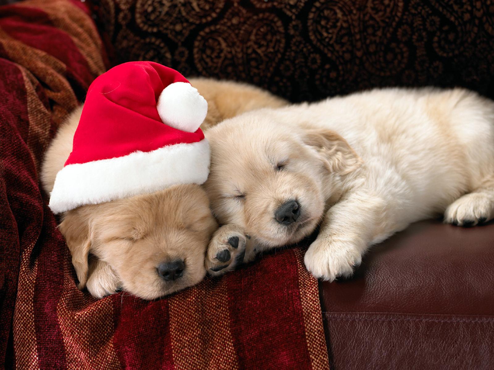 10619 скачать обои Праздники, Животные, Собаки, Новый Год (New Year), Рождество (Christmas, Xmas) - заставки и картинки бесплатно