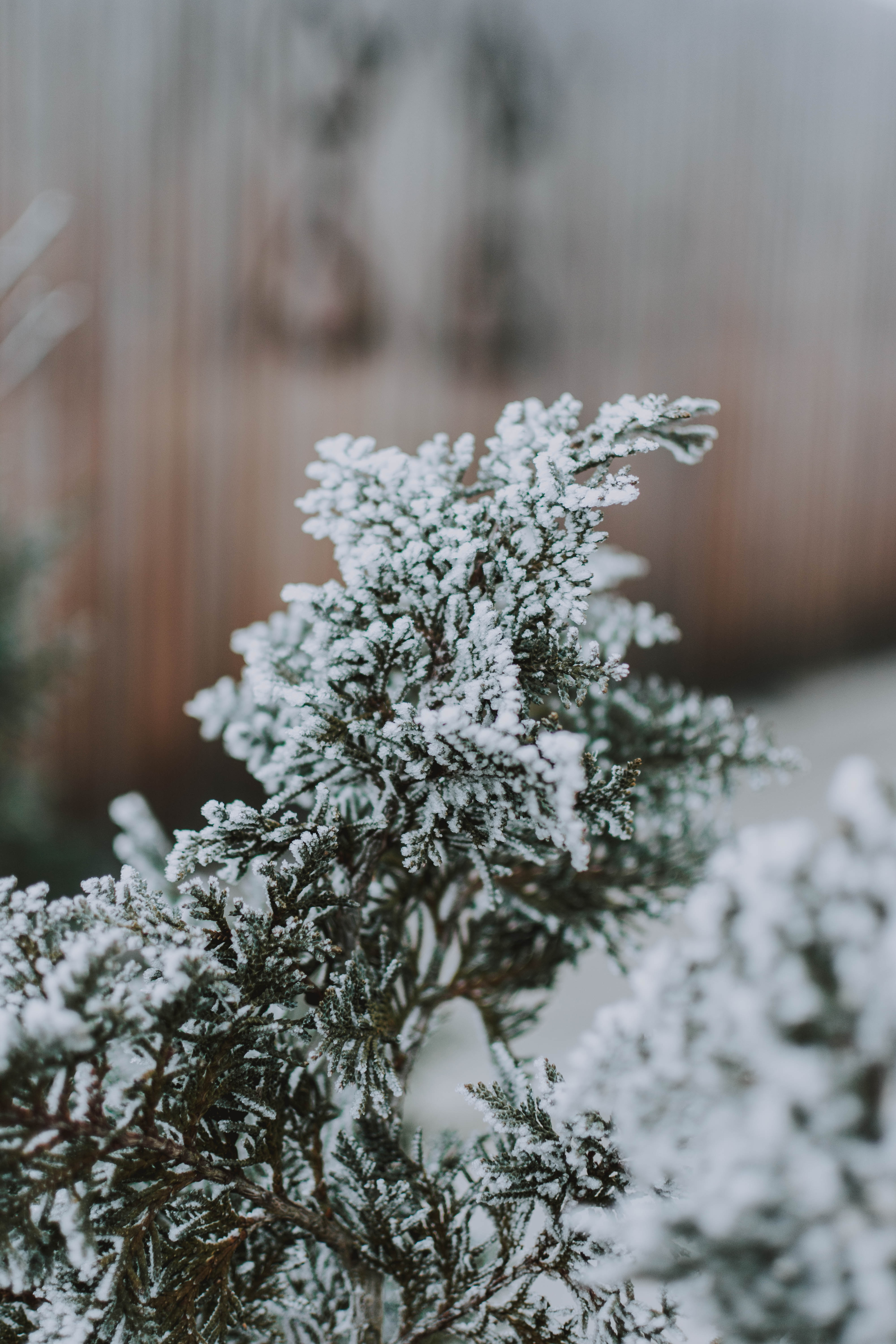 157165 download wallpaper Macro, Branch, Snow, Needles screensavers and pictures for free