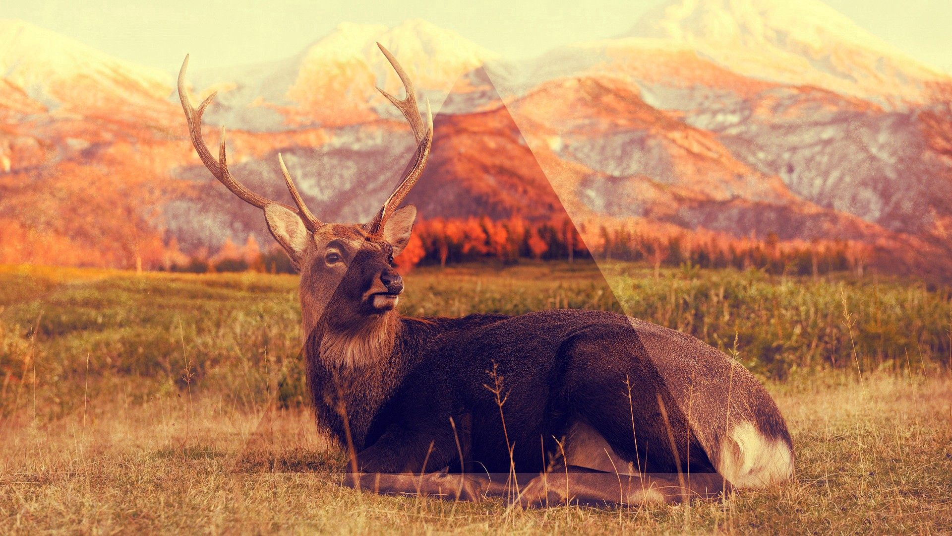 109161 Screensavers and Wallpapers Sit for phone. Download Animals, Grass, Sit, Deer, Triangle pictures for free