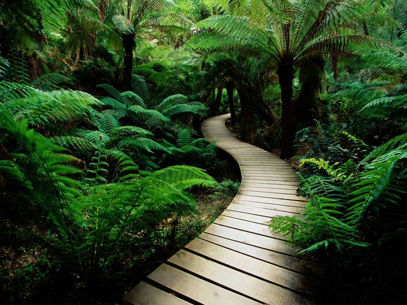 29966 Hintergrundbild herunterladen Landschaft, Palms, Farne - Bildschirmschoner und Bilder kostenlos
