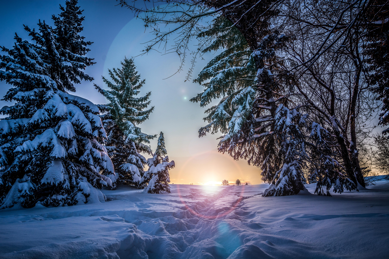 79932 скачать обои Зима, Деревья, Тропинка, Природа, Снег, Солнечный Свет - заставки и картинки бесплатно