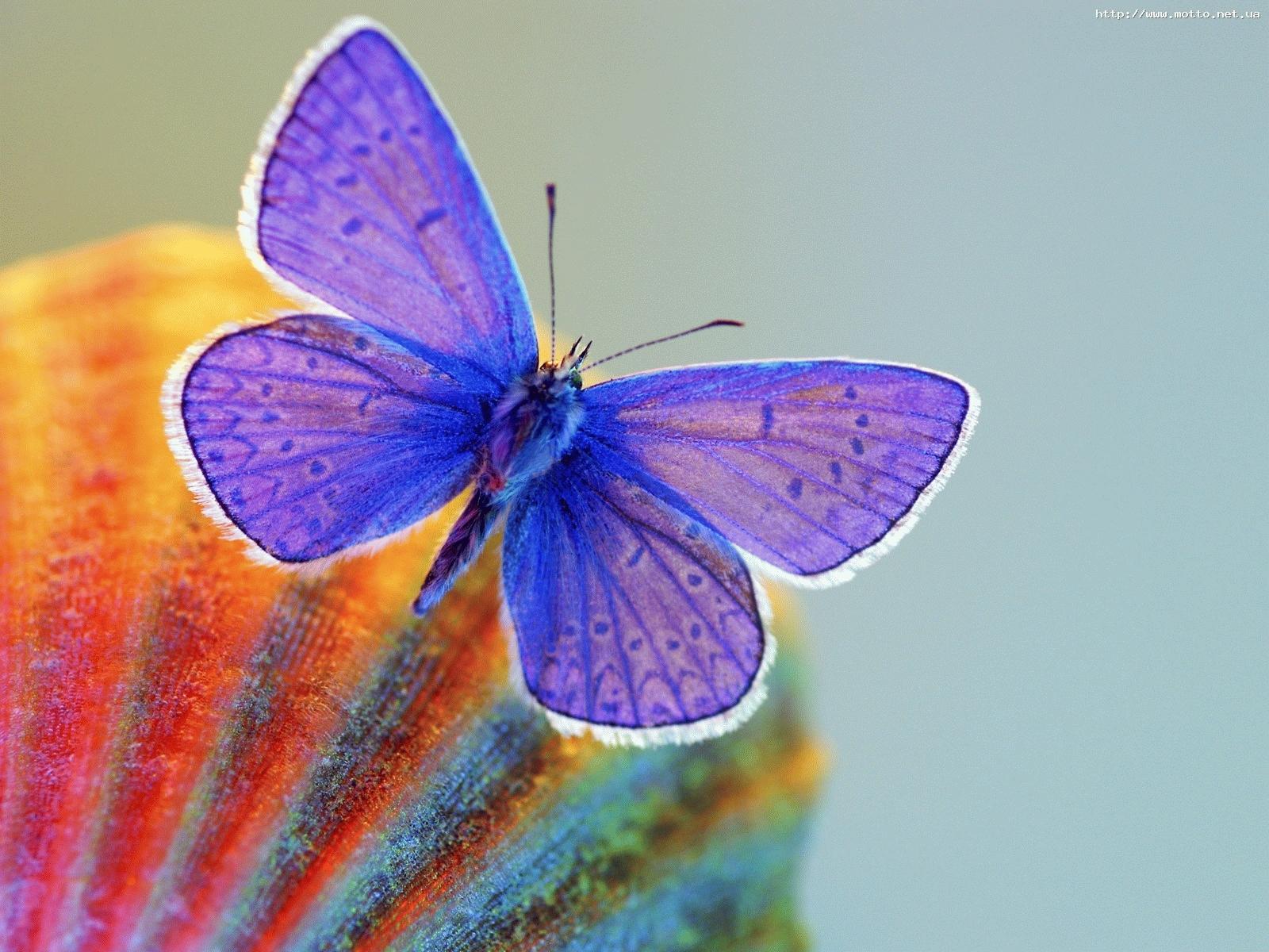 5810 descargar fondo de pantalla Mariposas, Insectos: protectores de pantalla e imágenes gratis