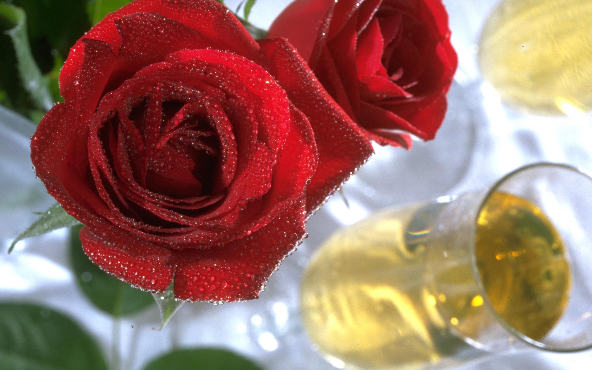 35998 скачать обои Растения, Цветы, Розы - заставки и картинки бесплатно