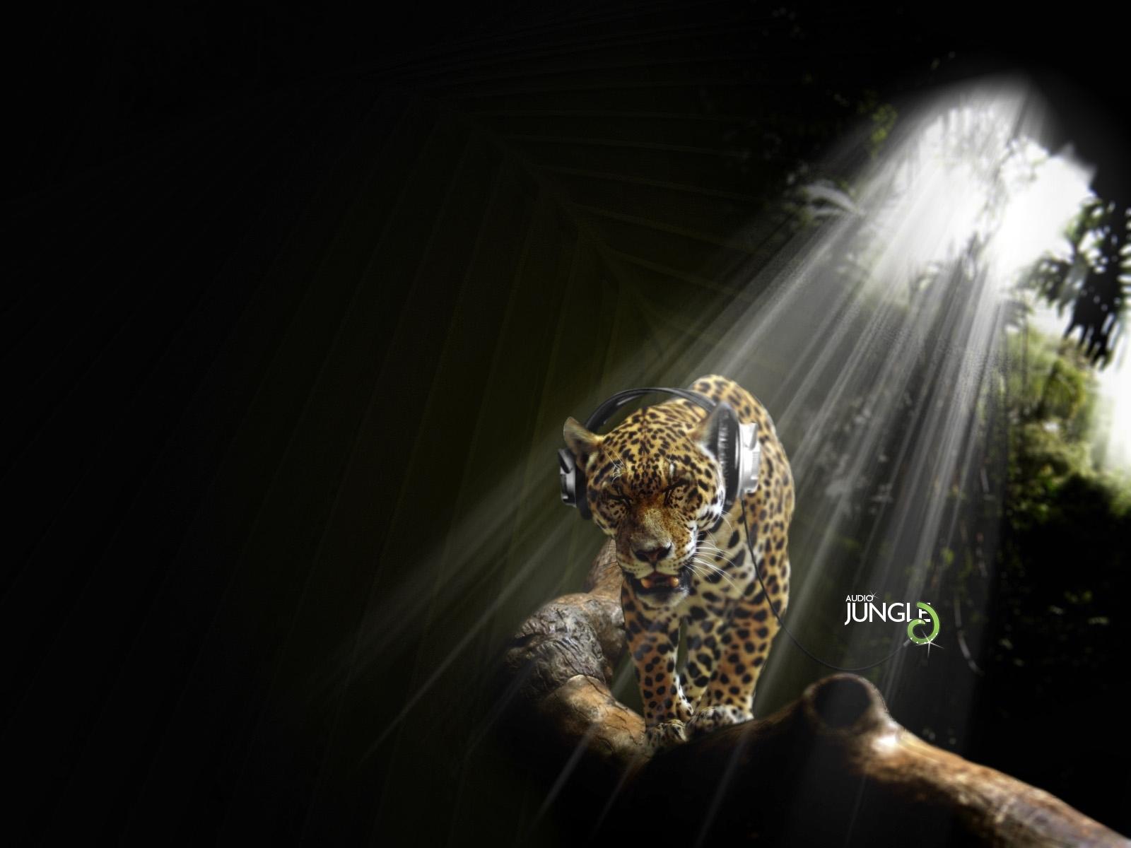 5660 скачать обои Юмор, Музыка, Животные, Леопарды - заставки и картинки бесплатно