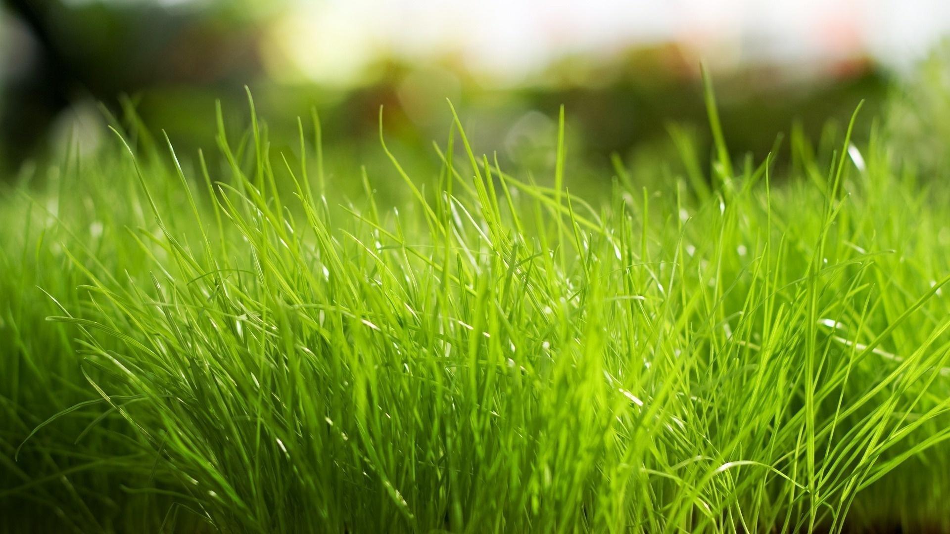 11826 скачать обои Растения, Трава, Фон - заставки и картинки бесплатно
