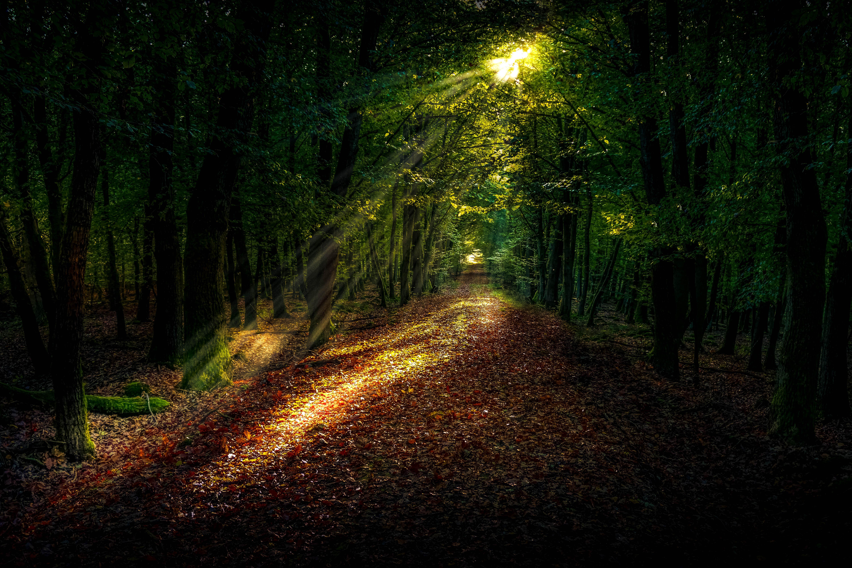 76399 завантажити шпалери Осінь, Природа, Дерева, Ліс, Стежка, Шлях, Сонячне Світло, Сонячного Світла - заставки і картинки безкоштовно