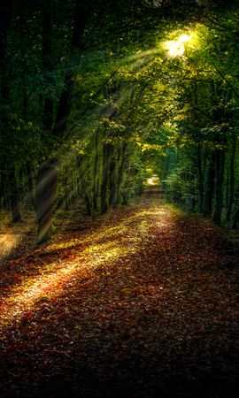 76399 télécharger le fond d'écran Nature, Forêt, Chemin, Automne, Arbres, Lumière Du Soleil - économiseurs d'écran et images gratuitement