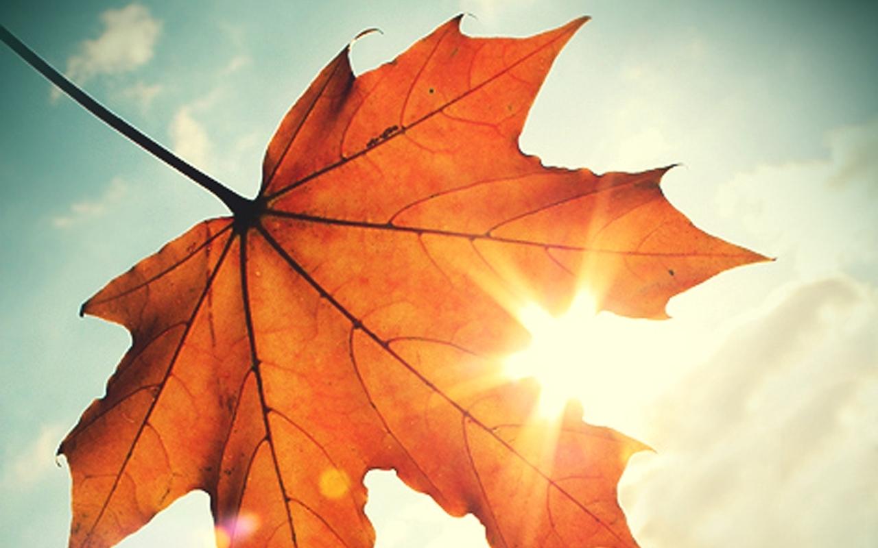 3339 скачать обои Растения, Листья, Солнце - заставки и картинки бесплатно