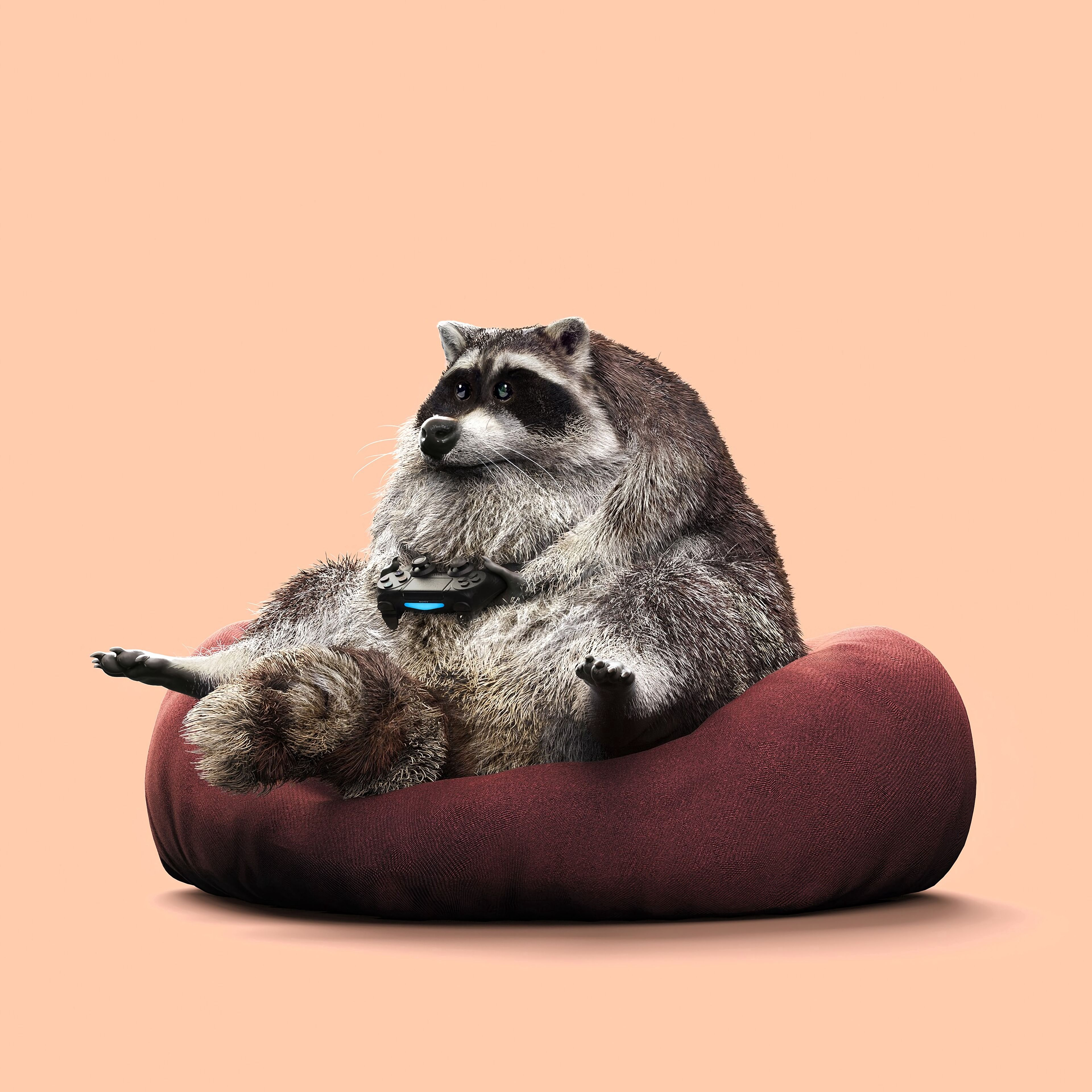 108462 Screensavers and Wallpapers Raccoon for phone. Download Funny, Gamer, Miscellanea, Miscellaneous, Play, Raccoon, Joystick, Controller, Gamepad pictures for free