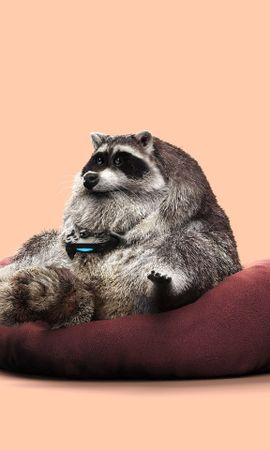108462 Screensavers and Wallpapers Funny for phone. Download Miscellanea, Miscellaneous, Raccoon, Joystick, Funny, Gamepad, Controller, Gamer, Play pictures for free