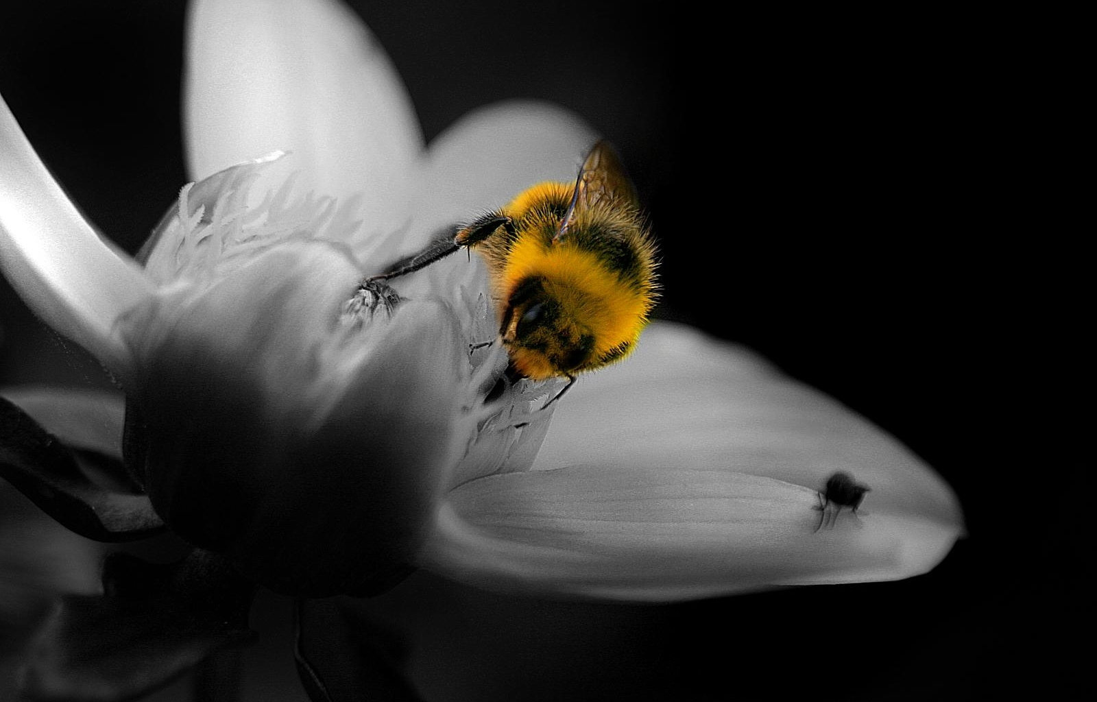 5636 Screensavers and Wallpapers Bees for phone. Download Flowers, Insects, Bees pictures for free