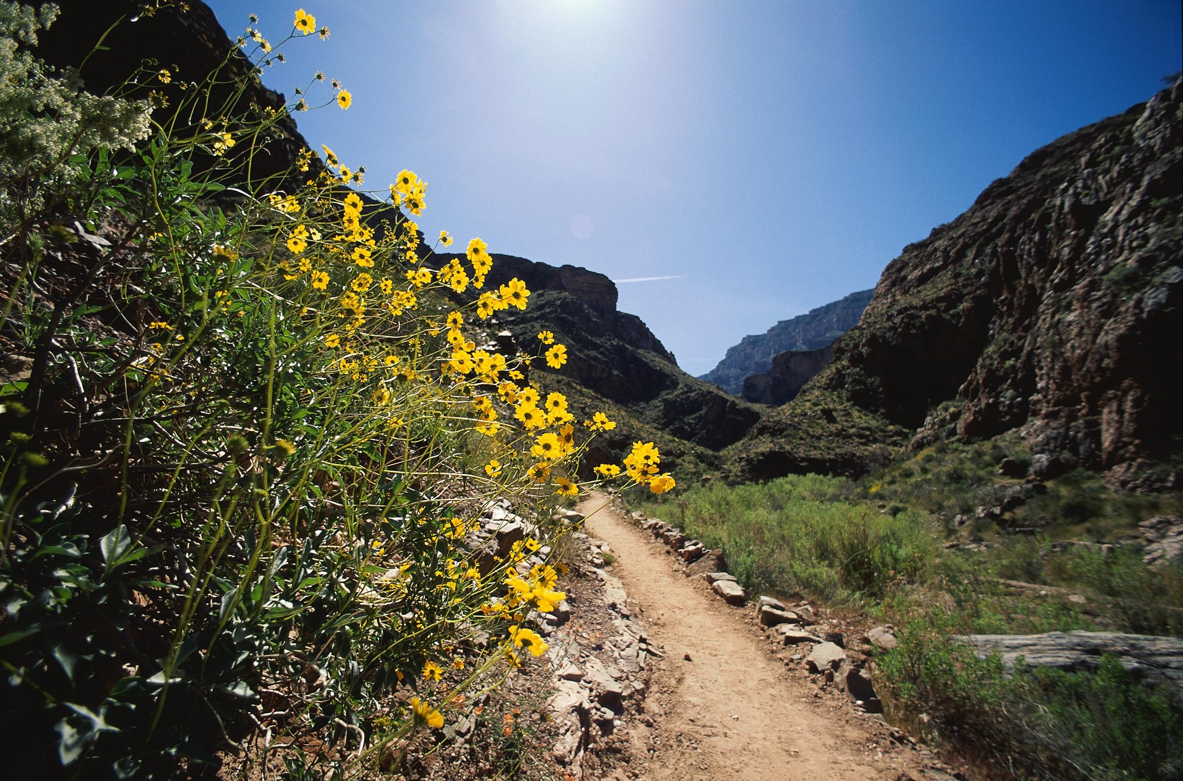 107404 скачать Желтые обои на телефон бесплатно, Природа, Цветы, Камни, Горы, Дорога, Тропа Желтые картинки и заставки на мобильный