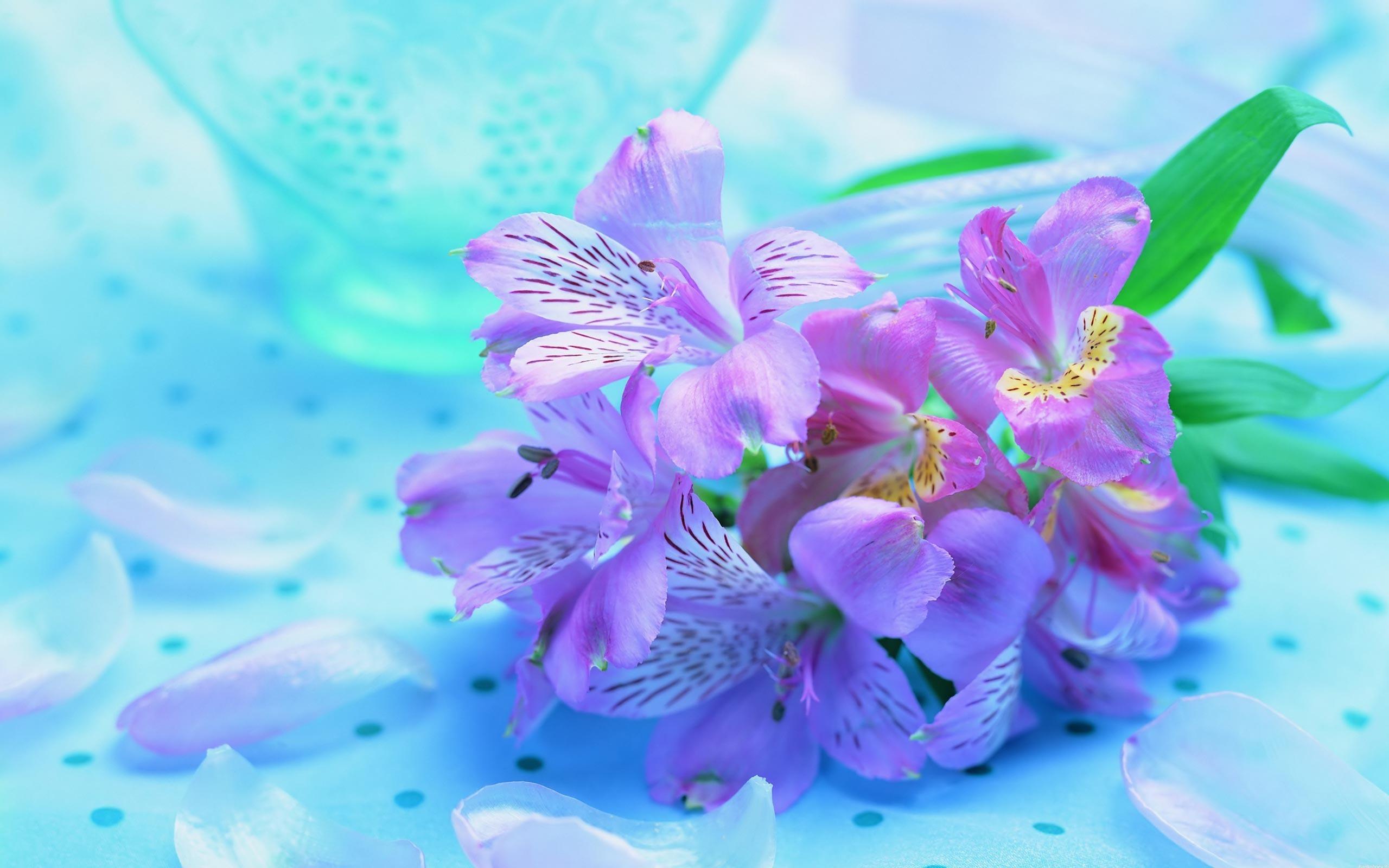20613 скачать обои Растения, Цветы - заставки и картинки бесплатно