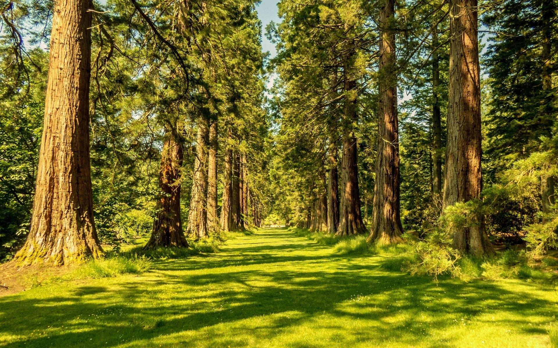 25561 скачать обои Пейзаж, Деревья, Трава, Дороги - заставки и картинки бесплатно