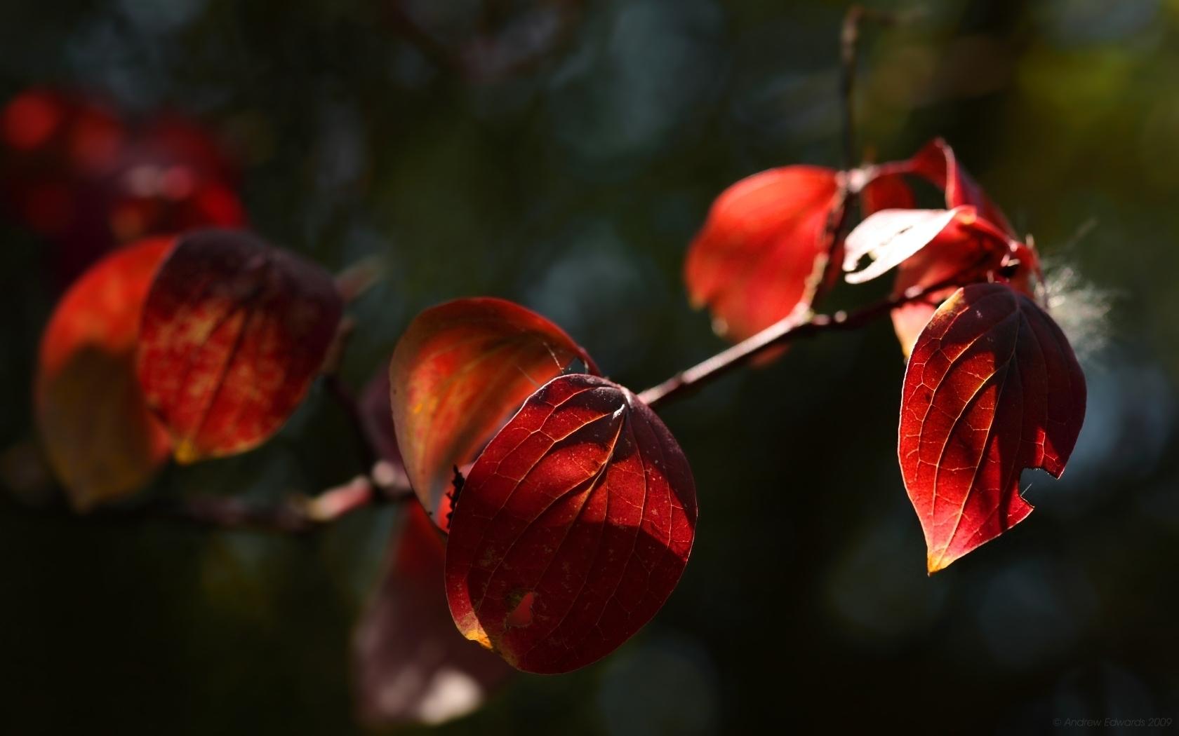 10480 скачать обои Растения, Листья - заставки и картинки бесплатно