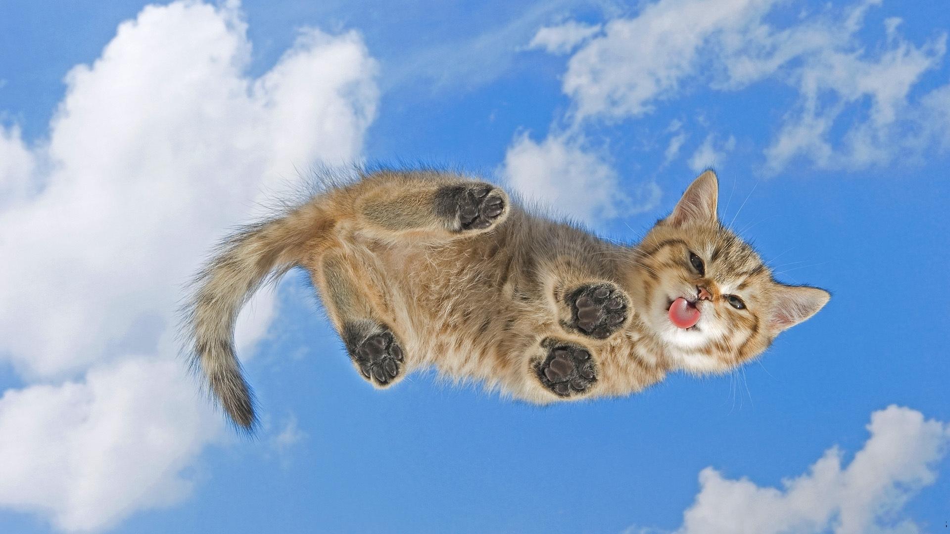 24402 скачать обои Животные, Кошки (Коты, Котики) - заставки и картинки бесплатно