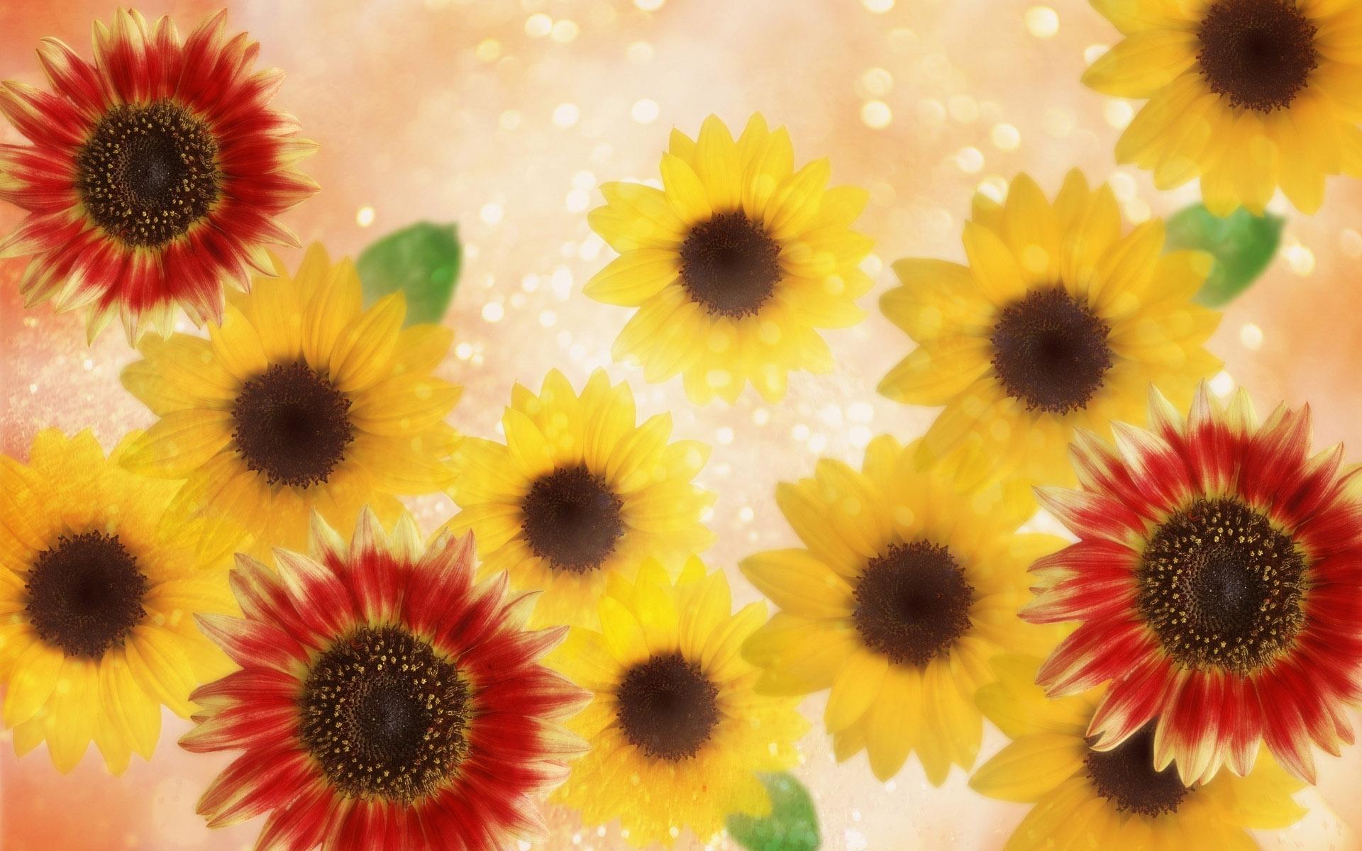 4932 скачать обои Растения, Цветы, Подсолнухи - заставки и картинки бесплатно