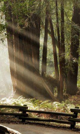 30257 скачать обои Пейзаж, Деревья - заставки и картинки бесплатно