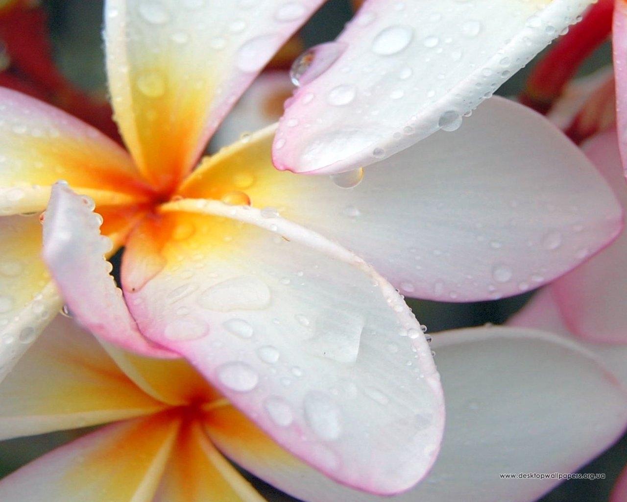 5160 скачать обои Растения, Цветы - заставки и картинки бесплатно