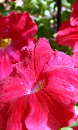 5734 скачать обои Растения, Цветы - заставки и картинки бесплатно