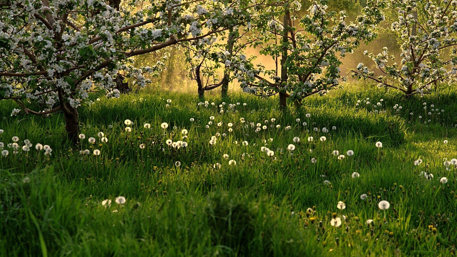 145637 download wallpaper Nature, Trees, Grass, Dandelions, Field screensavers and pictures for free