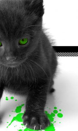 2241 скачать обои Животные, Кошки (Коты, Котики), Артфото - заставки и картинки бесплатно
