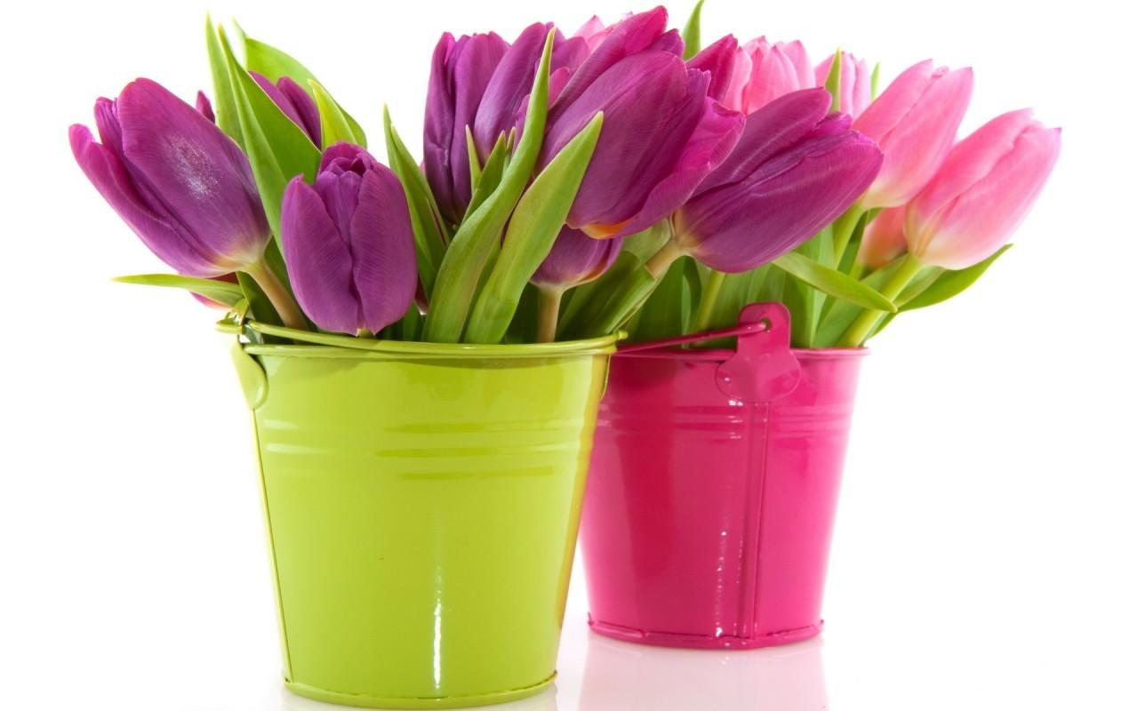 21686 скачать обои Растения, Цветы, Тюльпаны, Букеты - заставки и картинки бесплатно