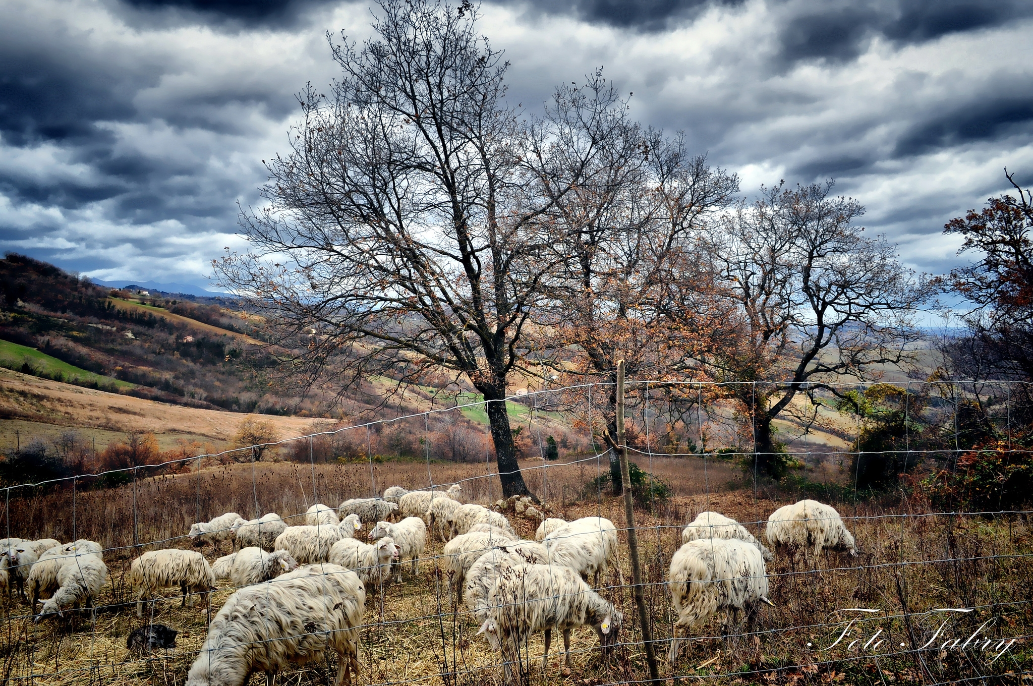 69331 Screensavers and Wallpapers Sheep for phone. Download Nature, Trees, Autumn, Herd, Sheep, Pasture, Sheeps pictures for free
