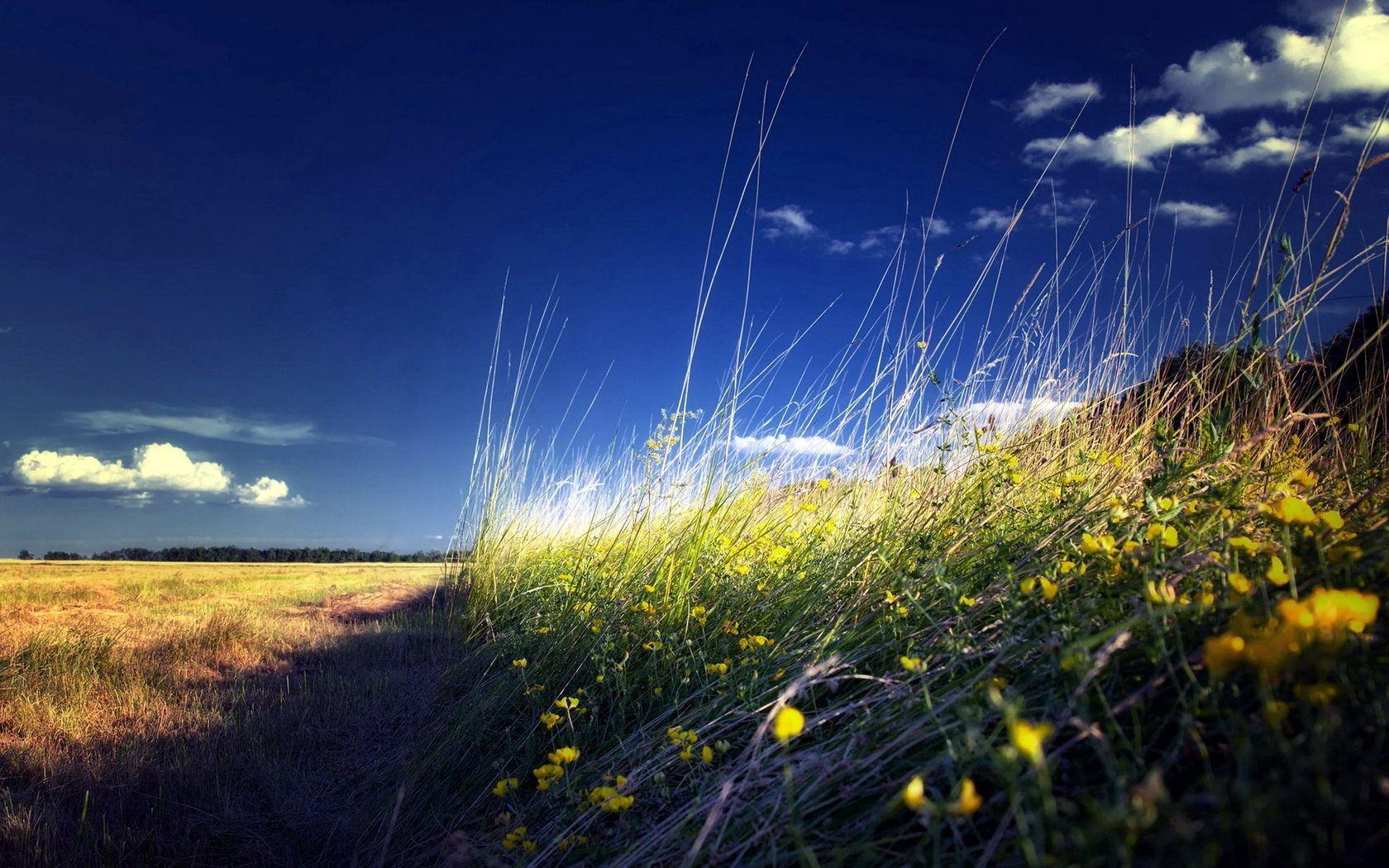 61057 скачать обои Природа, Поле, Трава, Лето, Пейзаж, Цветы - заставки и картинки бесплатно