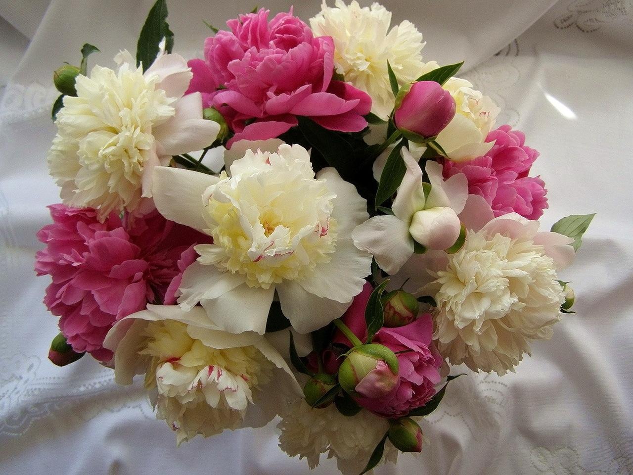 39972 скачать обои Растения, Букеты, Цветы - заставки и картинки бесплатно