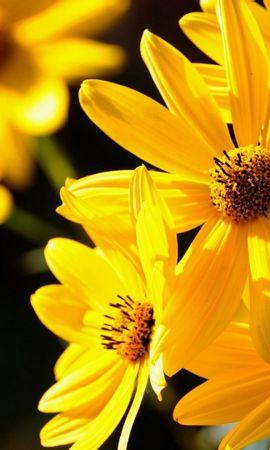 41247 descargar fondo de pantalla Plantas, Flores: protectores de pantalla e imágenes gratis