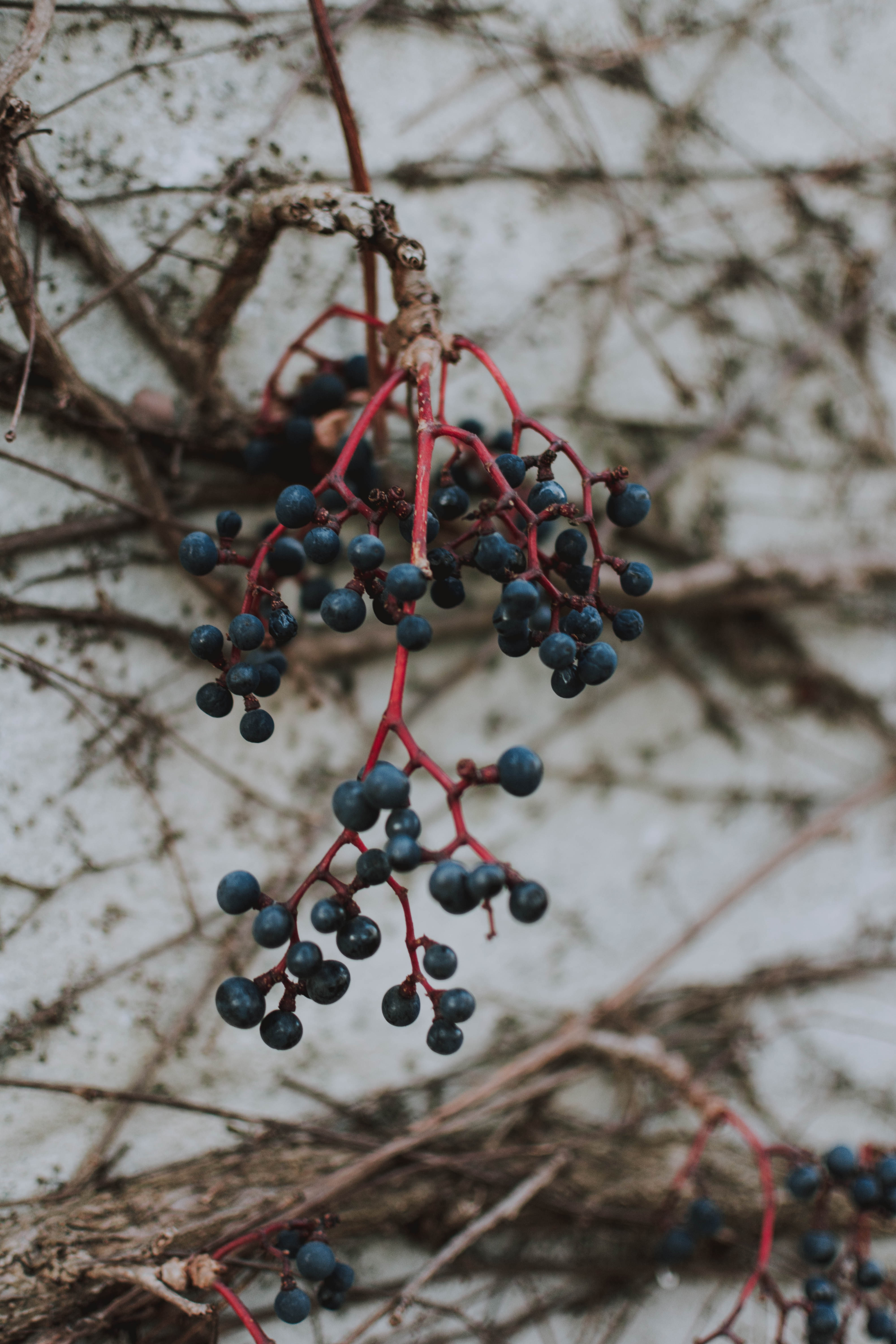 98439 download wallpaper Macro, Bunch, Berries screensavers and pictures for free