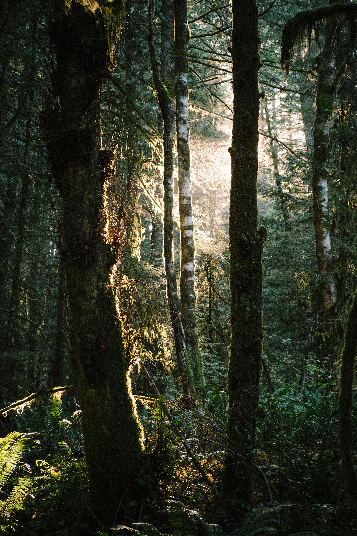 106027 Hintergrundbild herunterladen Natur, Bäume, Grass, Farne, Balken, Strahlen, Wald - Bildschirmschoner und Bilder kostenlos