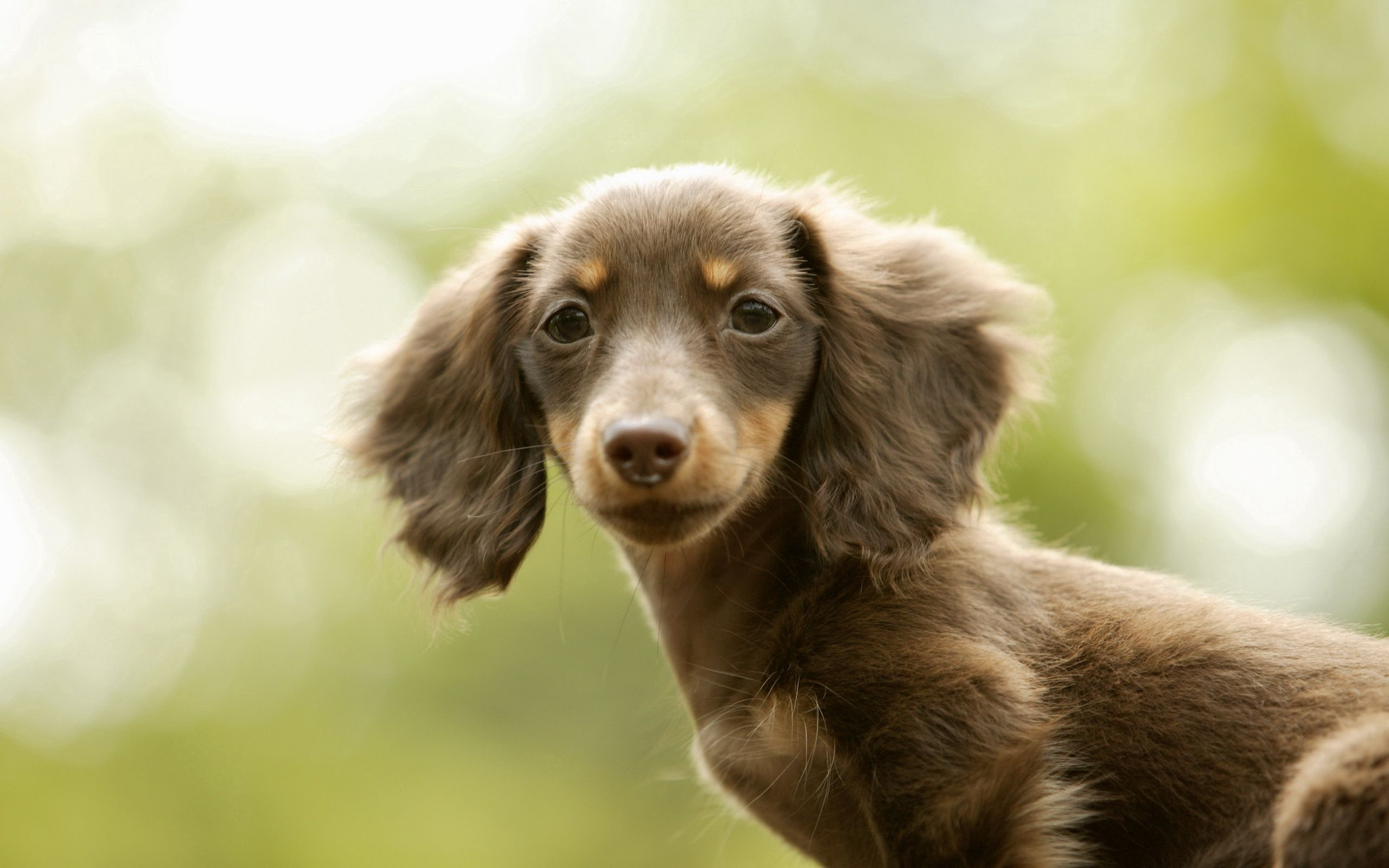 86690 download wallpaper Animals, Dog, Kid, Tot, Eared, Tired screensavers and pictures for free