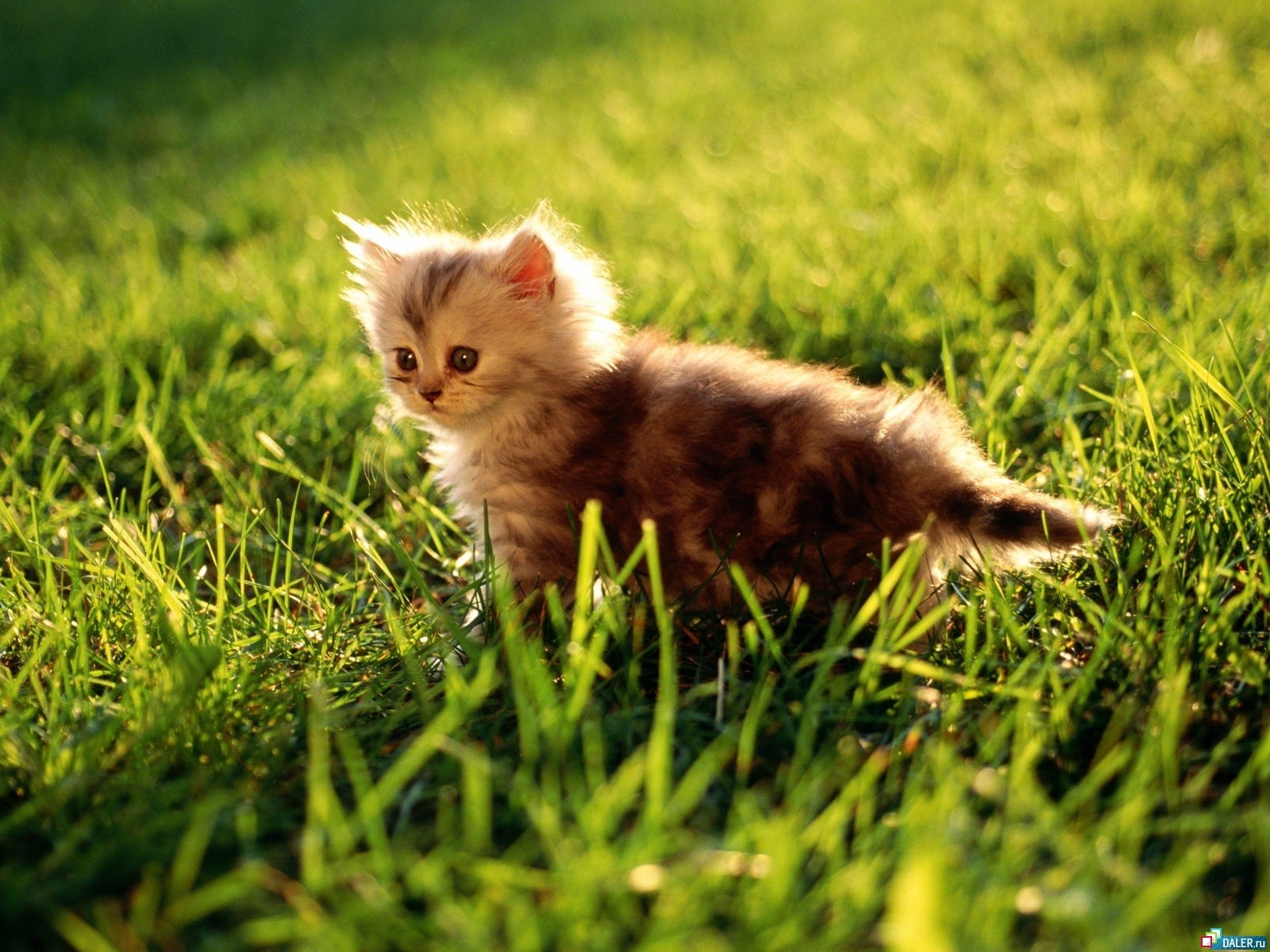 2754 download wallpaper Animals, Cats screensavers and pictures for free