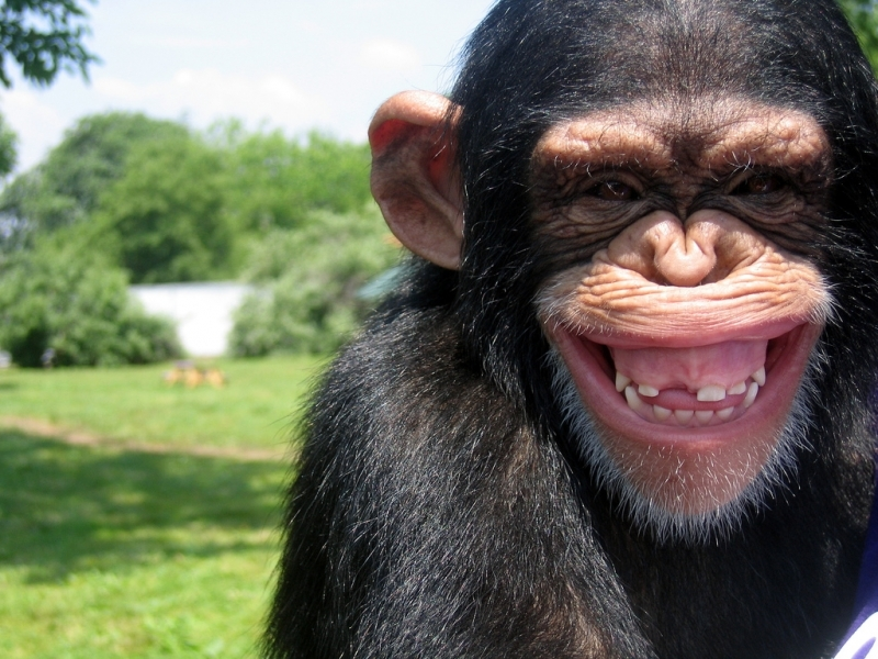 41846 Screensavers and Wallpapers Monkeys for phone. Download Animals, Monkeys pictures for free