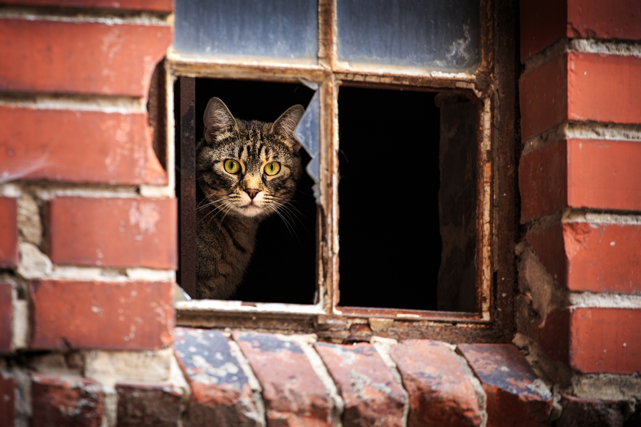 155931 download wallpaper Animals, Cat, Window, Broken, Peek Out, Look Out screensavers and pictures for free