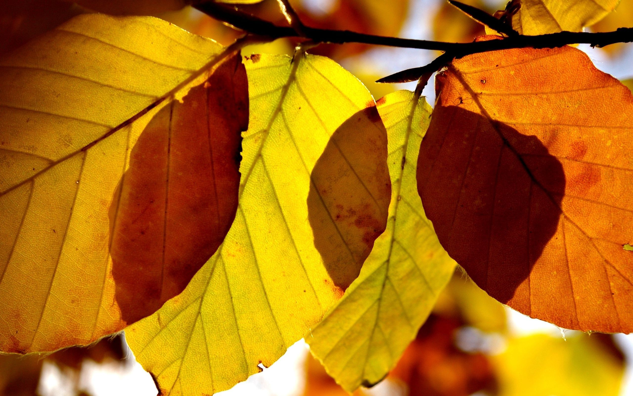 113210 download wallpaper Macro, Leaves, Form, Autumn, Branch screensavers and pictures for free