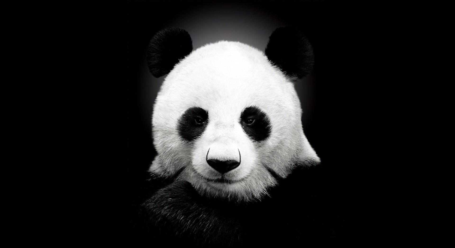 Download mobile wallpaper Pandas, Animals for free.