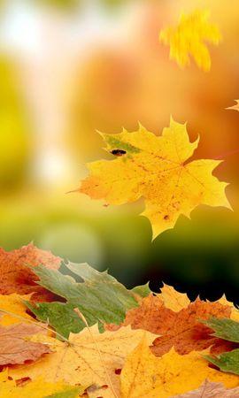 33877 скачать обои Фон, Осень, Листья - заставки и картинки бесплатно