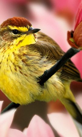 12779 download wallpaper Animals, Birds screensavers and pictures for free