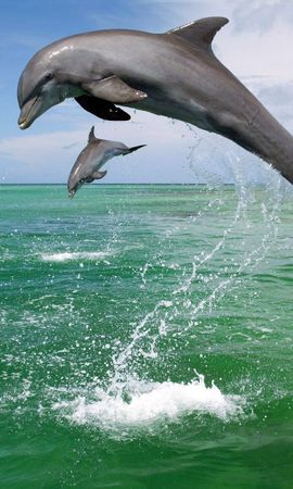 4814 download wallpaper Animals, Water, Dolfins, Sea screensavers and pictures for free