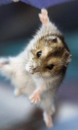 29429 baixar papel de parede Animais, Hamsters - protetores de tela e imagens gratuitamente